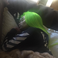 Image 8: Rob Kardashian posts sweet tribute to a sleeping B